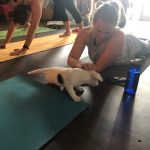 Puppy Yoga : A dog on a mat at puppy yoga.