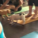 Puppy Yoga : Puppies in a yoga mat.