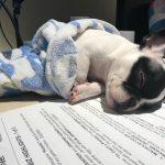 #TBTwJnD Alfie: Baby Alfie Sleeping