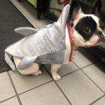 Alfie(& Katy)ween: Day 5 - A Jazzercise Instructor and Baby Shark! : Alfie as Baby Shark