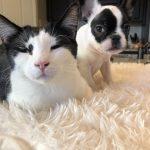 #TBTwJnD Alfie: Alfie and George