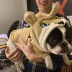Day 3 of Alfieween : Alfie in Chipmunk costume