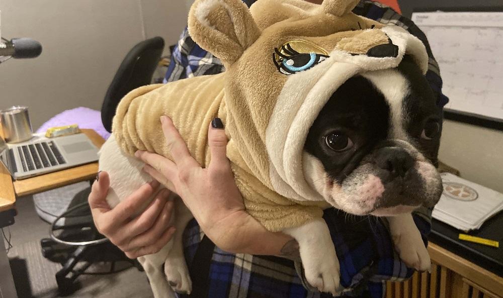Deb's dog alfie dressed up like a lion cub