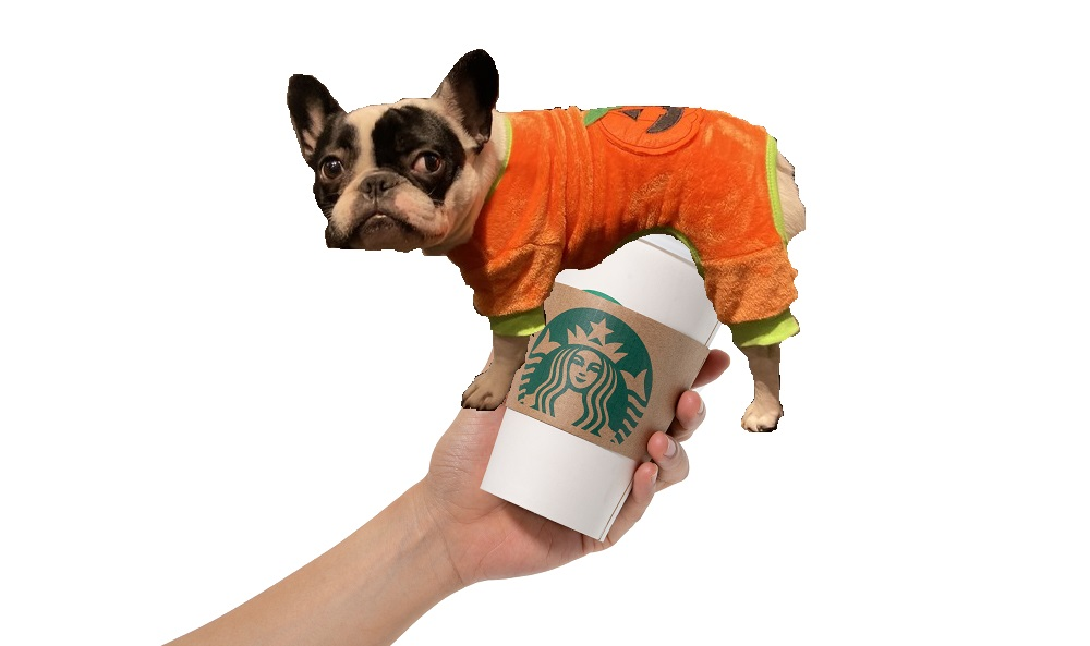 deb's dog alfie in a pumpkin costume photoshopped onto a starbucks cup