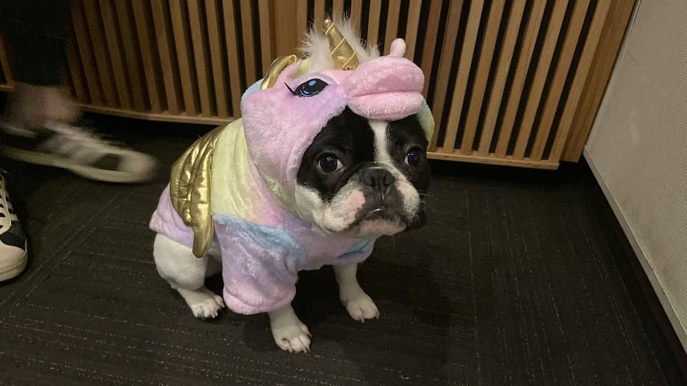 alfie dressed as a unicorn for halloween