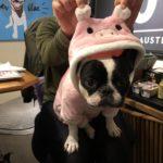 Pig-1