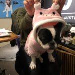 Pig-4