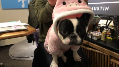 alfie dressed in a pig costume for halloween