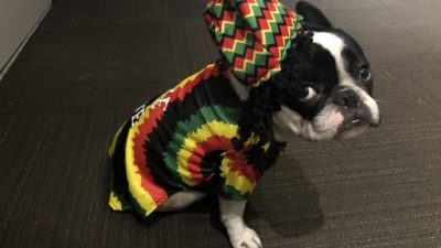 alfie dressed in a rastafarian costume for Halloween