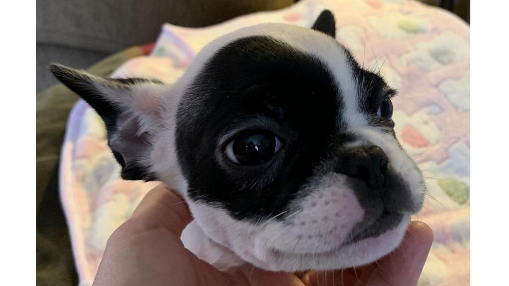 deb's dog alfie as a puppy