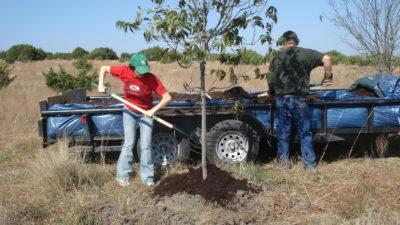 deb planting a tree