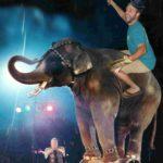 circus-taco