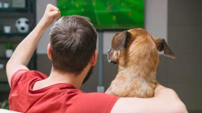dog and human watching football