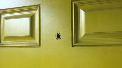 the giant spider on Nick's front door that he left for his roommate to walk into