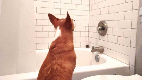 Nick Has A Shower Stalker