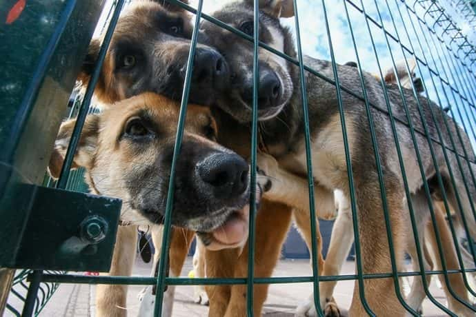Three dogs outside behind a fence. (Photo Alexander ShcherbakTASS via Getty Images)