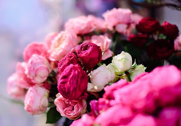 Pink Flowers in bunch. PC: Getty Images. Photo: Getty Images. Yuri Smityuk.