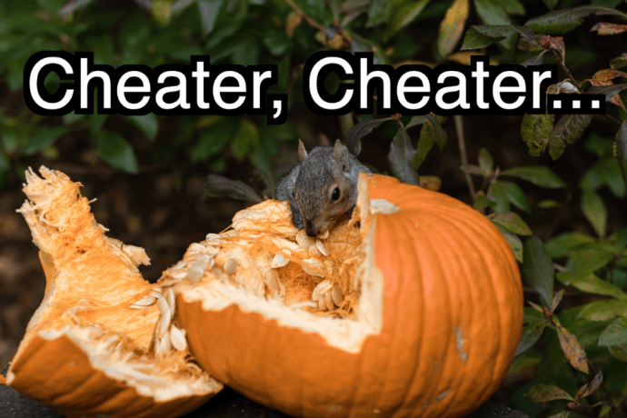 A squirrel eats from a pumpkin that has been split open. The Houston Astros are cheaters.