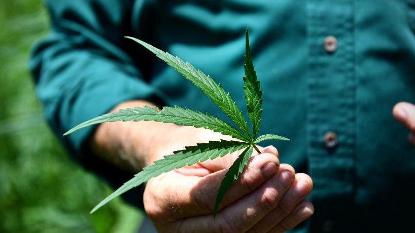 Photo of man holding hemp leaf -