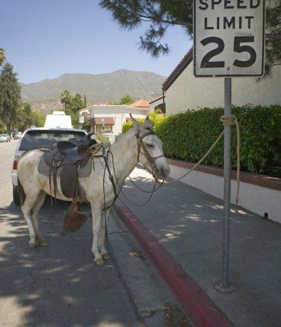 25 mph Horse