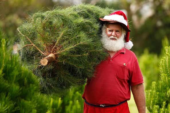 A man dressed as santa claus carrying a Christmas tree on his shoulder.