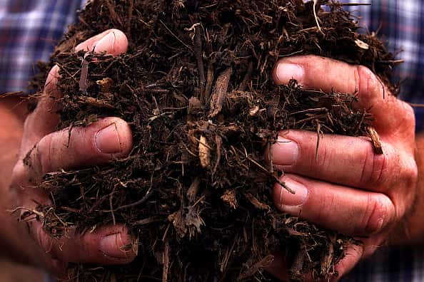 Close up of hands holding a pile of mulch