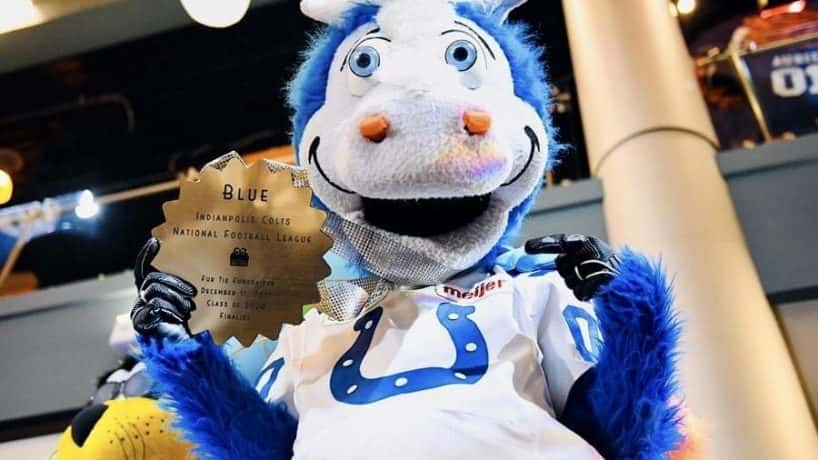 Colts Mascot Blue - Mascot Hall of Fame courtesy of Trey Mock