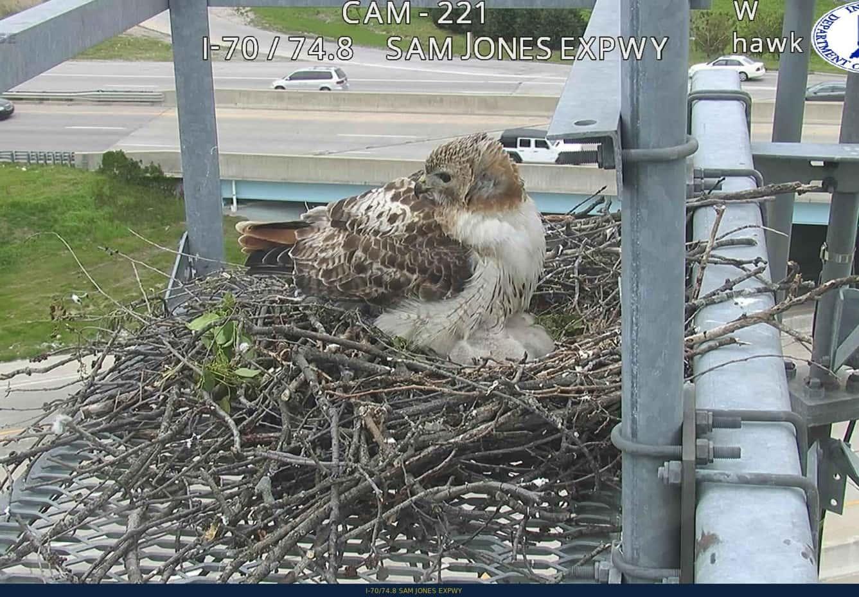 Bird Nest Sam Jones