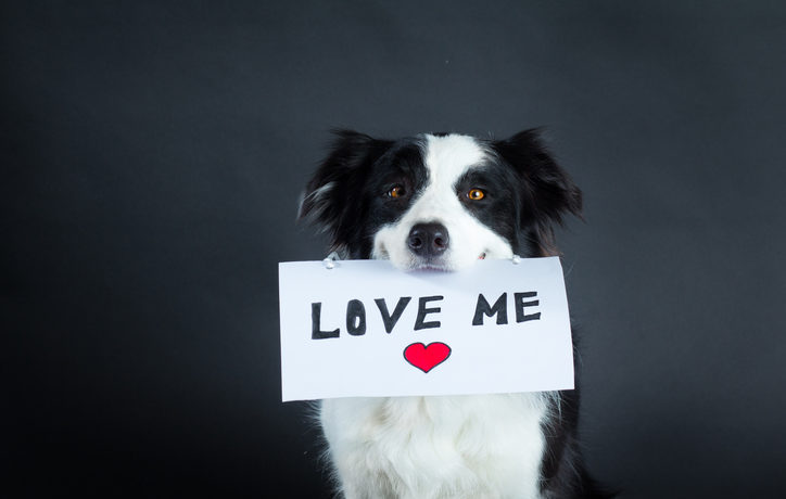 """Border collie dog in studio carrying a piece of paper with """"Love me"""" lettering."""