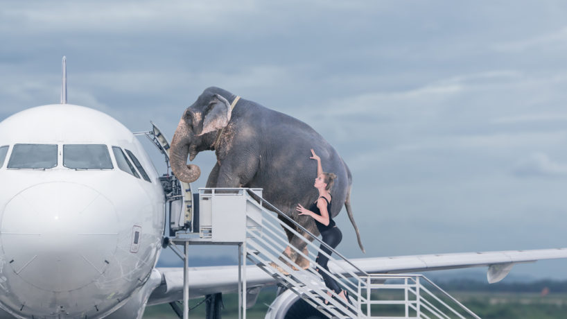 Woman loading elephant on board of plane. Concept of baggage overweight or travel with domestic pets