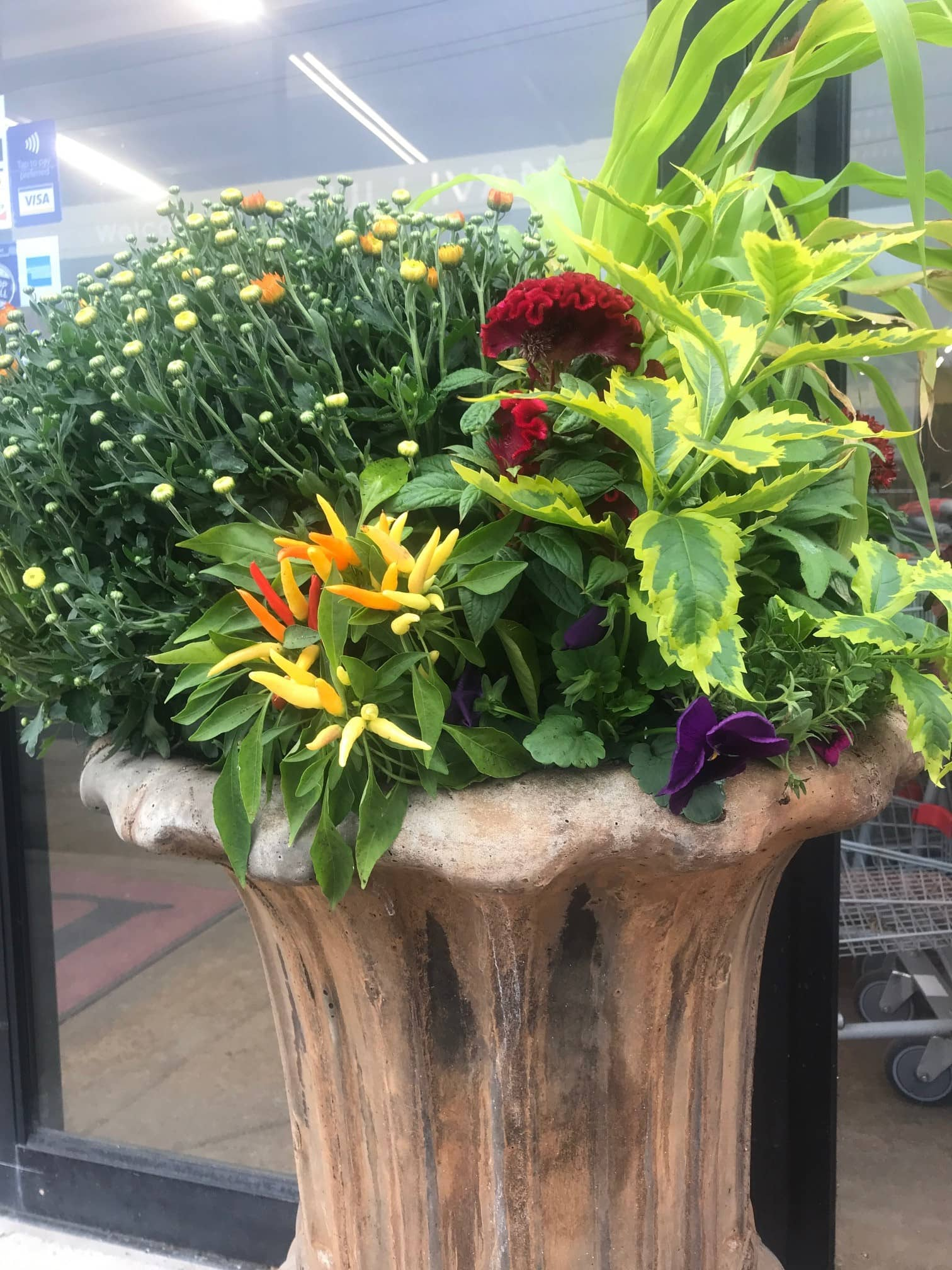 Fall Planter with mum