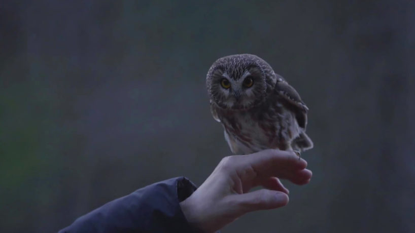 Rockefeller, the owl that stowed away and traveled on the Rockefeller Christmas tree last week, was released into the wild.