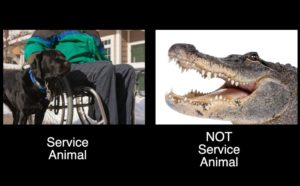 """An Alligator and a Black Labrador are pictured with text reading: """"Service Animal"""" under the dog and """"Not Service Animal"""" written under the Alligator"""