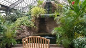 Inside Garfiled Park Conservatory, a bench faces a waterfall in a lush filled greenhouse.