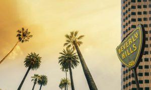 Los Angeles, West Coast Palm Tree Sunshine themed background,