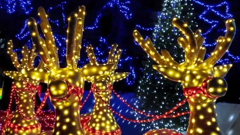 Christmas lights of reindeers