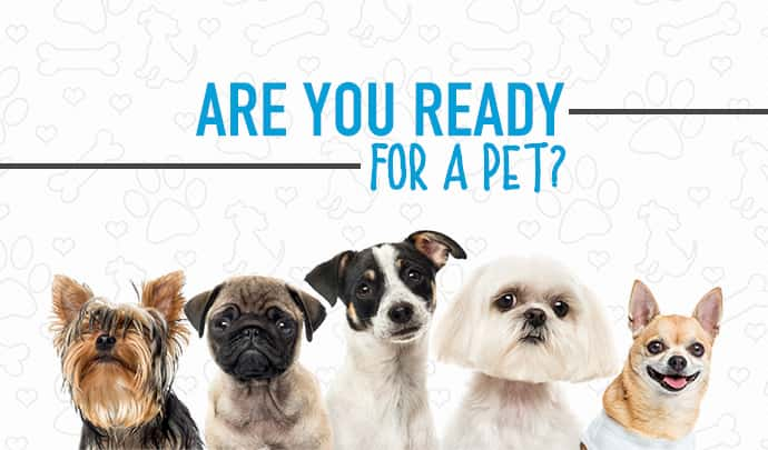 are you ready for a pet? with a bunch of dogs