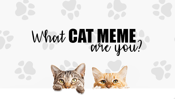 Two cats peaking up. Saying: What Cat Meme Are You?
