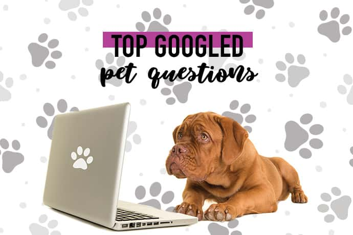dog on computer: top googled pet questions