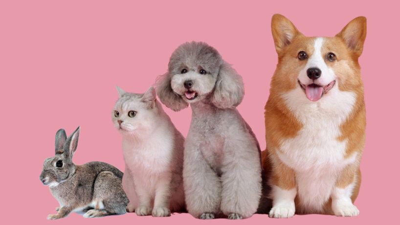 A rabbit, cat, and two dogs