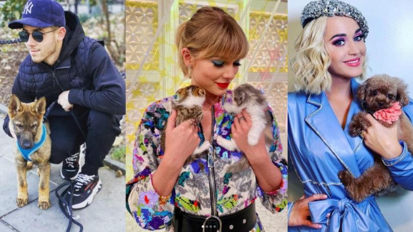 Nick Jonas with his dog, Taylor swift with cats, Katy Perry holding her dog