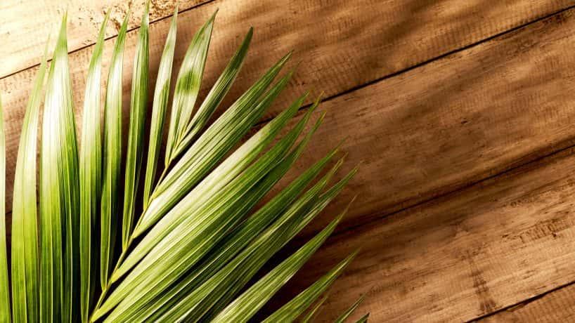 Palm Religious
