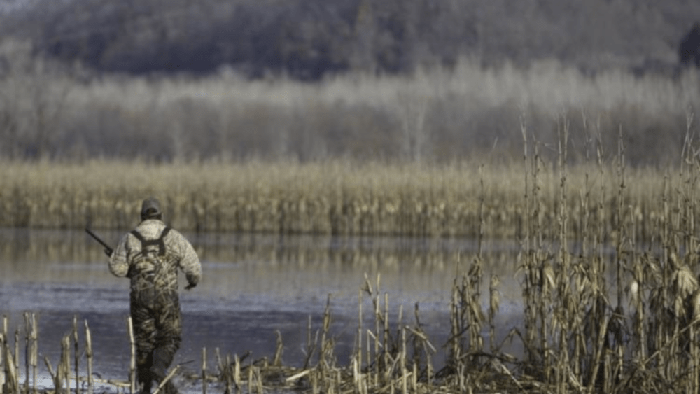 MDC MANAGED WATERFOWL HUNTS GOING TO COVID LEVEL RED