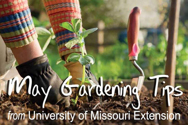 Gardening Tips from University of Missouri Extension