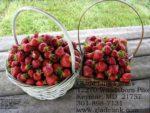 u-pic Strawberries