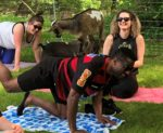 Have fun with Goat for the Soul, Goat Yoga!