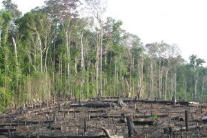 Record number of fires in Amazon rainforest, caused by humans