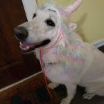 Unicorn: Luna the Lunicorn