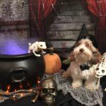 Howloween: Cauldron Pup