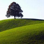 nature-scenery-6